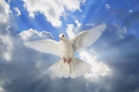 espiritu santo 5462