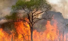 Destellito: ¿Cómo salvarse del fuego?