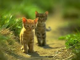 Destellito: Los Gatitos