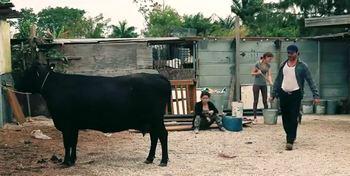 vacas en nuestra vida