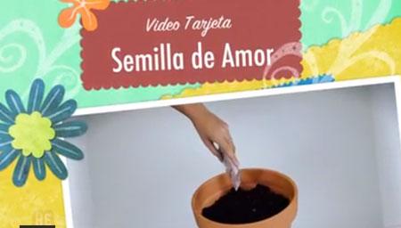 Video: Semilla de Amor