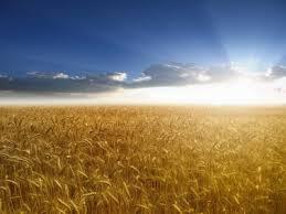 Si disfruto la siembra, bendigo la semilla