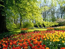 jardin bien plantado