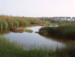 lago cenagoso