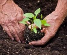 Reflexión: La anciana y el manzano