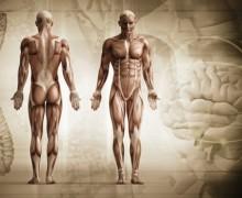 Reflexión: El Hombre, Un Cuerpo Increíble