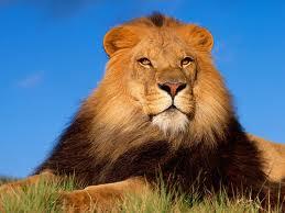 El León entronado destronado