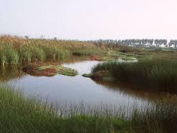 Reflexión: El lago cenagoso