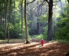 Reflexión: Perdido en el bosque