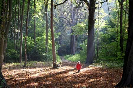 perdido-en-el-bosque